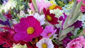 Cosmos and other bright pinks